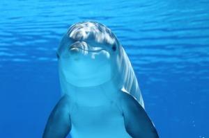 soñar con delfin