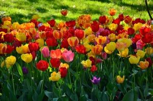 ejercicio concentracion en flor
